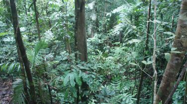 Dense Jungle Hinders the Search Effort